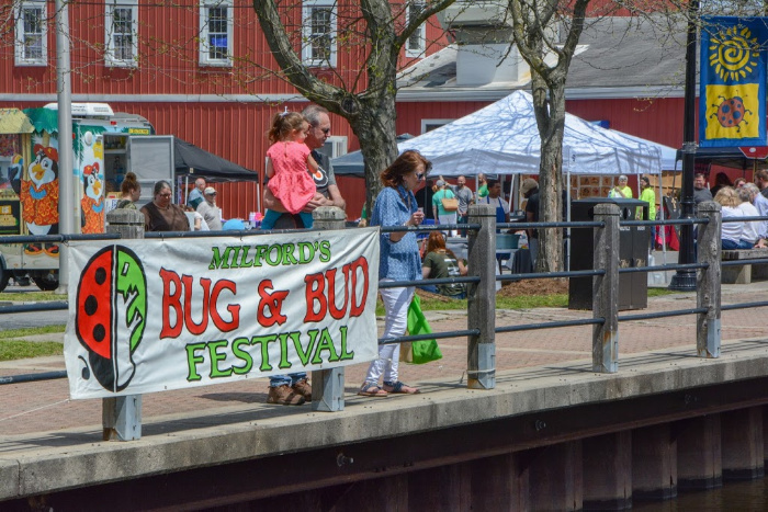 Bug and Bud Festival
